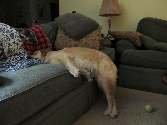 Врач рассказал, как заснуть …
