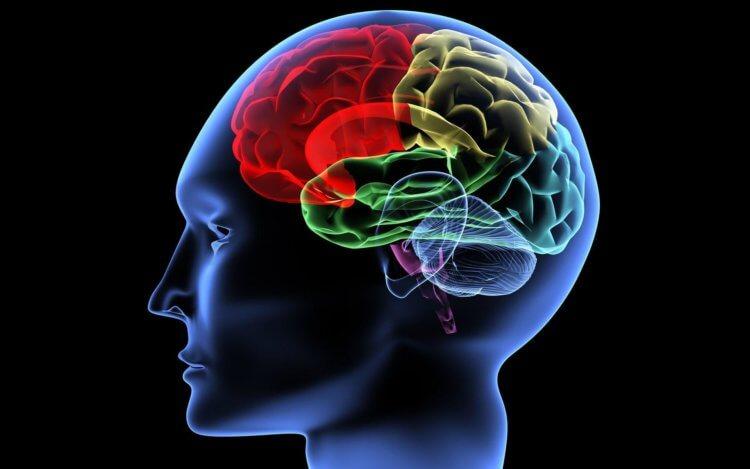 Что происходит в мозге, когд…