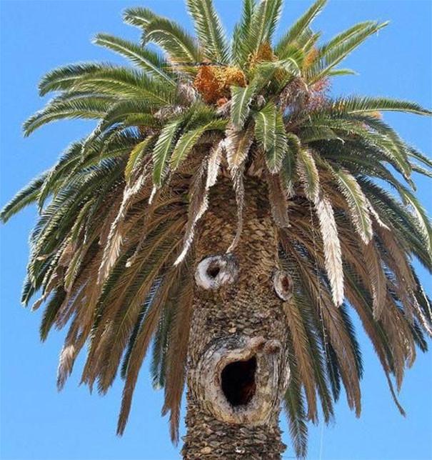 Веселая пальма парейдолия, похоже да не то же, похоже на лицо