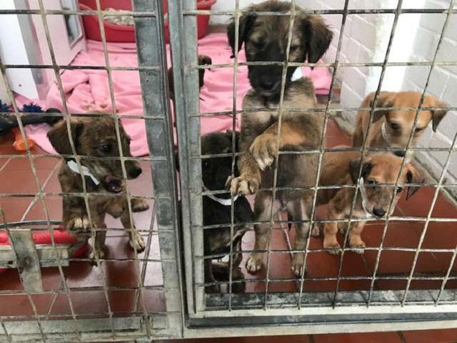 Брошенные «детки»: в клетке томилось 6 щенков, больных и голодных. Кто-то просто оставил их и ушел…