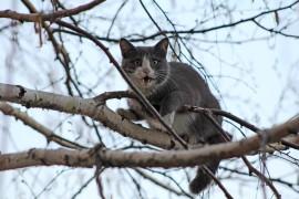 Кот-эквилибрист