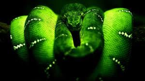 Эта вкусная  змея на завтрак