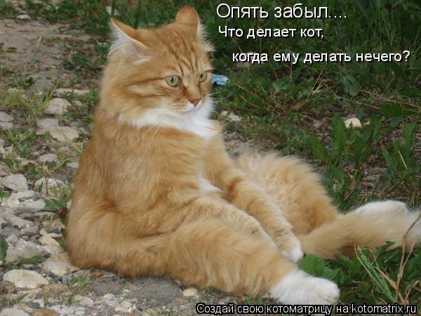 Свежая котоматрица. Размышления о жизни...