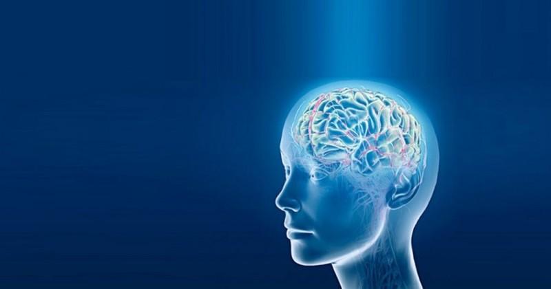 5 привычек, которые восстанавливают клетки мозга
