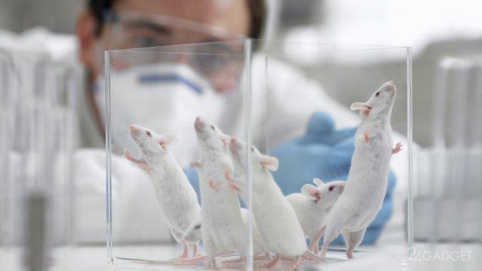 Ядерная медицина полностью излечила мышей от онкологии
