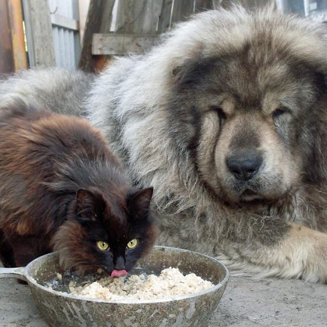 Как кот прикупил себе защитника. Вот же хитрющая тварь, и как только додумался?!