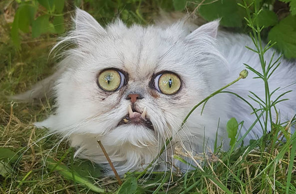 На смену злому коту пришел кот-отчаяние