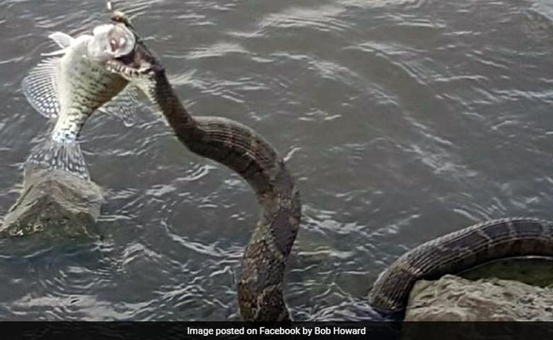 Водяная змея украла улов рыбака
