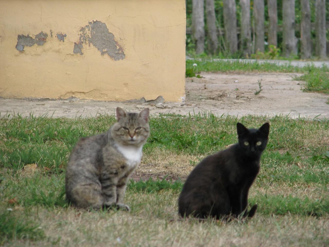 Братья наши меньшие: был такой кот…
