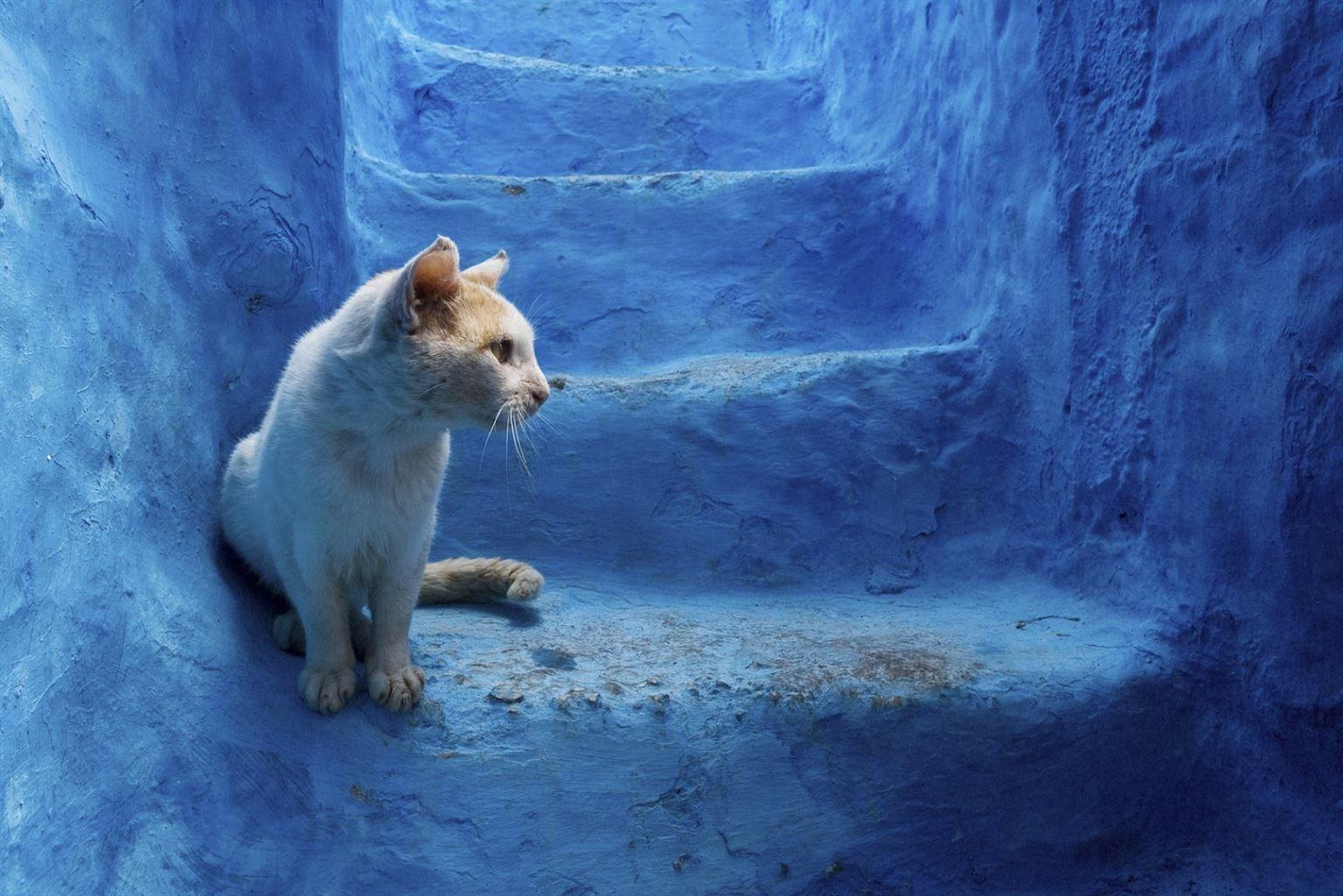 Шефшауэн: синий город Марокко