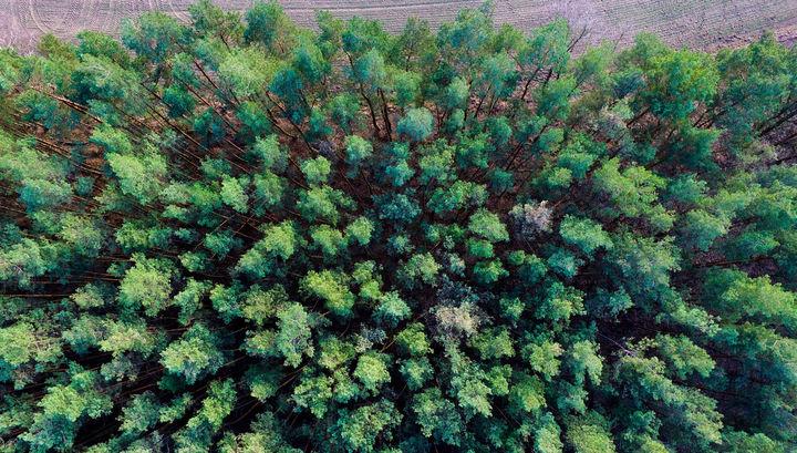 На стороне зла: деревья оказались источником вредного метана