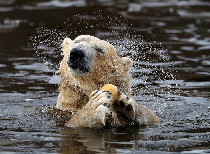 Необычайно удивительный и красивый мир животных