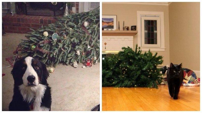 25 кошек и собак, которые разрушили Рождество