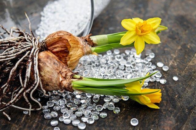 Гладиолусы в чулке, георгины в торфе. Как хранить луковицы цветов зимой