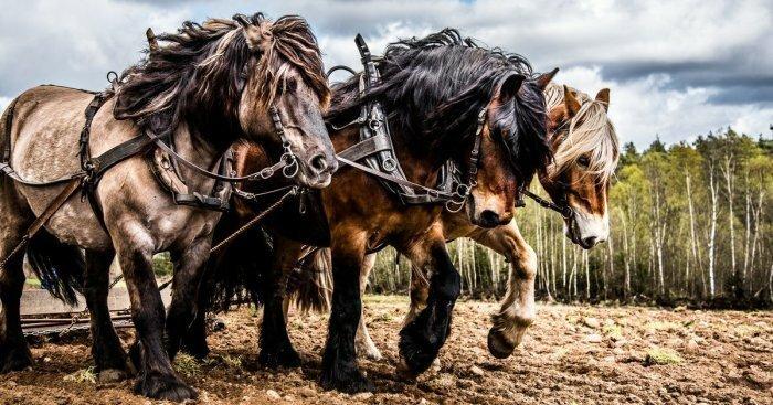 Лошадиные силы: откуда взяла…