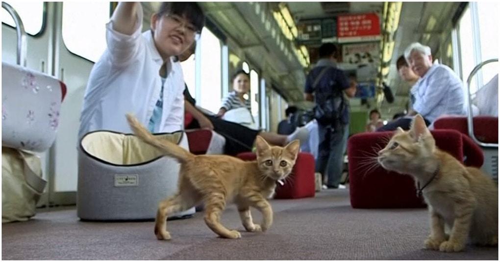 Кошки в поезде: необычный эксперимент японской железной дороги