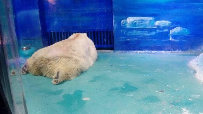 Ужасные условия содержания медведя.
