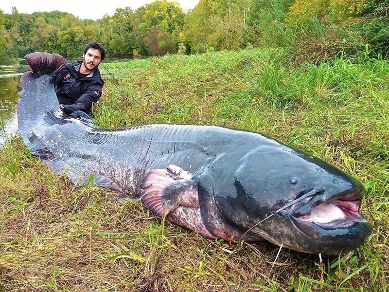 И вот тогда уже неизвестно кто будет охотником, а кто добычей морские монстры, рыбалка, рыбы