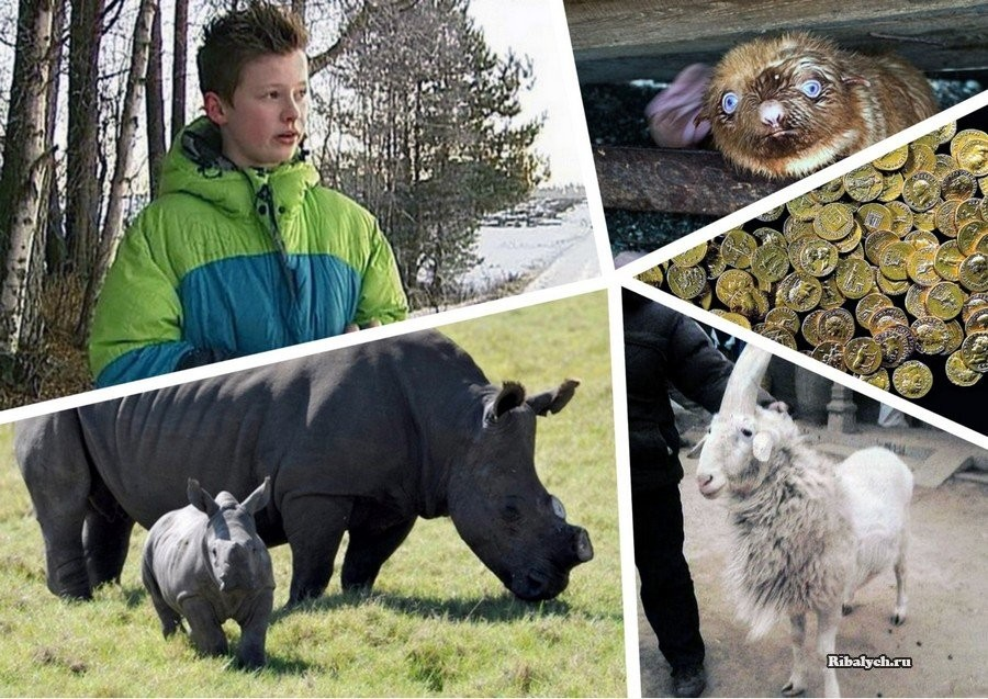 10 новостей о животных, кото…