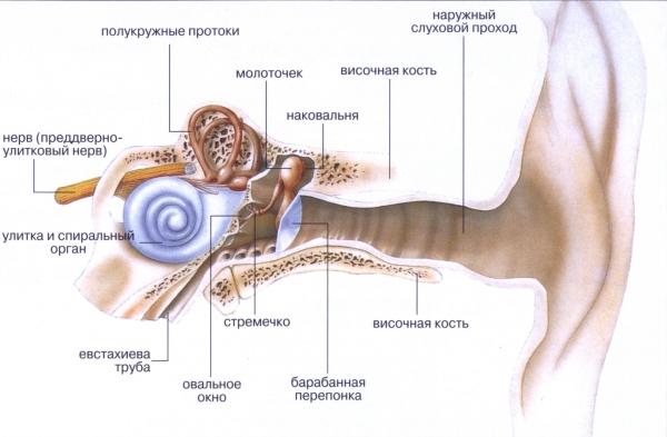 Как лечить отит (воспаление среднего уха)