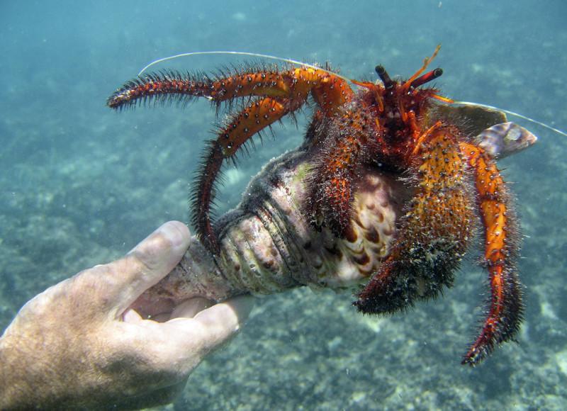 Тайны океанов: встречи в синих глубинах