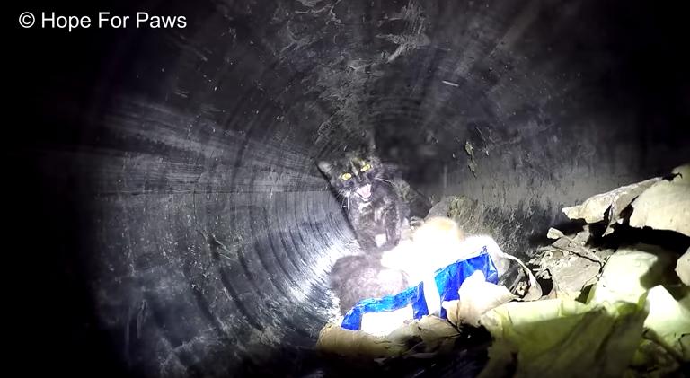 Кошка застряла в водосточной трубе со своими крошечными котятами