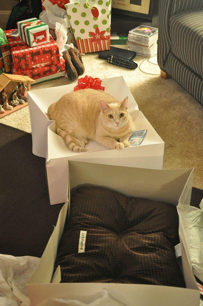 10. Подарили коту подушку на Рождество… животные, кошка, логика