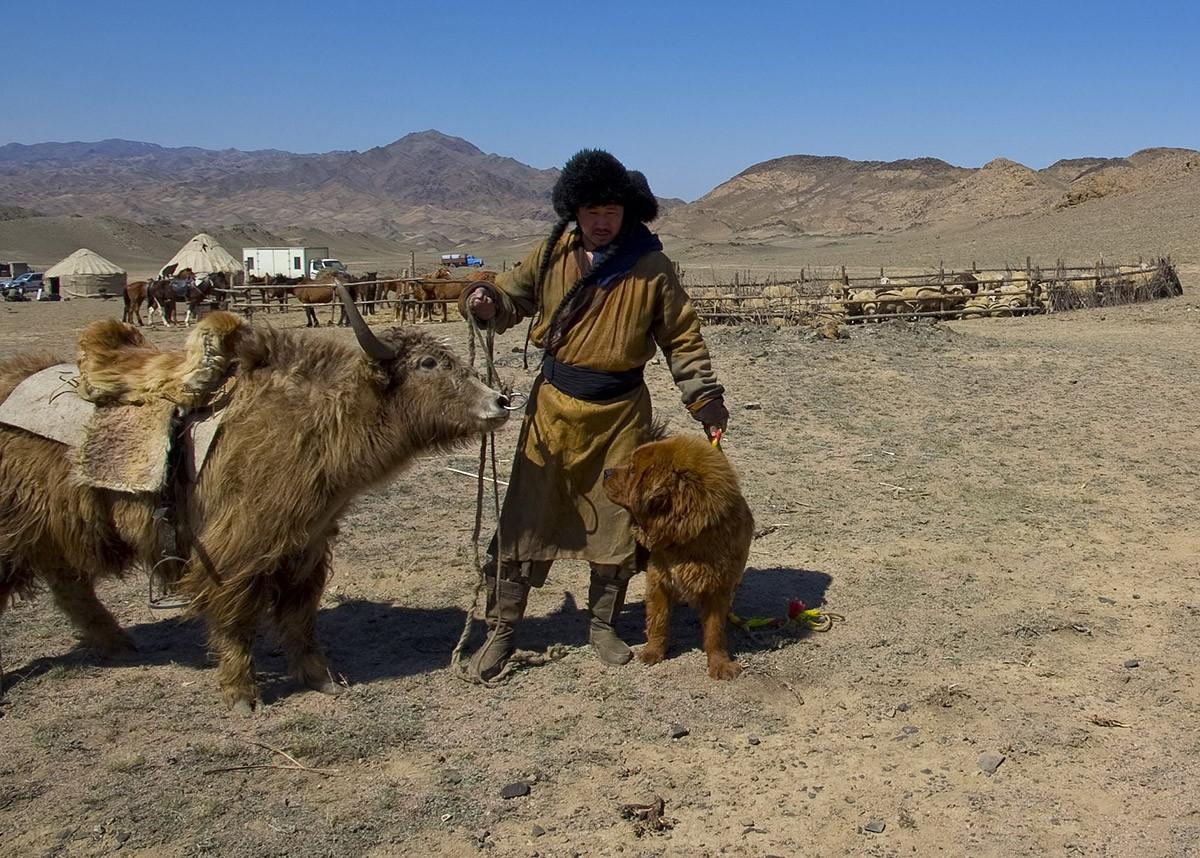 Gangsen13 Снежные львы: из Тибета в Казахстан