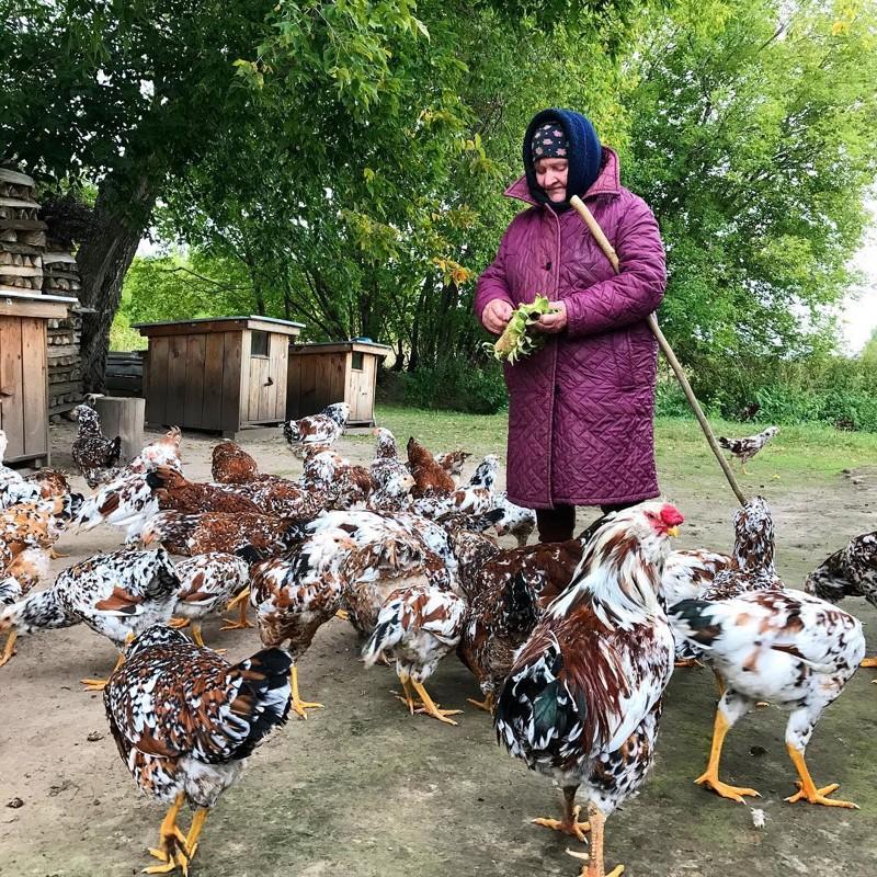 Рязанская область глубинка, деревня, красиво, лес, россия, село, фото