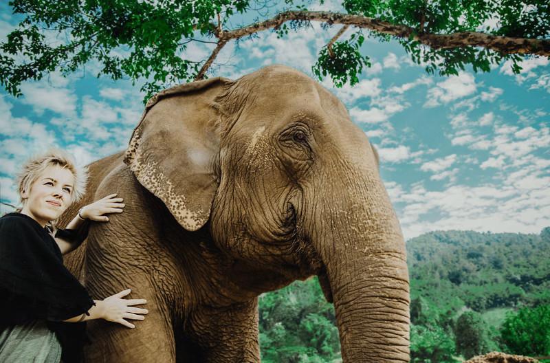 Как живут слоны, спасенные из лап туризма, незаконных грузоперевозок и циркачей