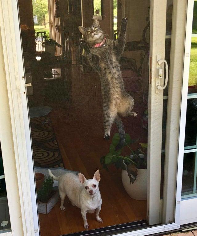 15 милых кошек и собак, которые делают забавные вещи