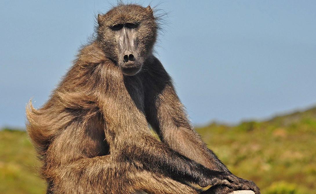 10 самых умных существ мира