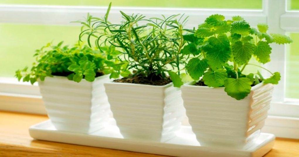 8 комнатных растений, которые помогут вам лучше спать по ночам