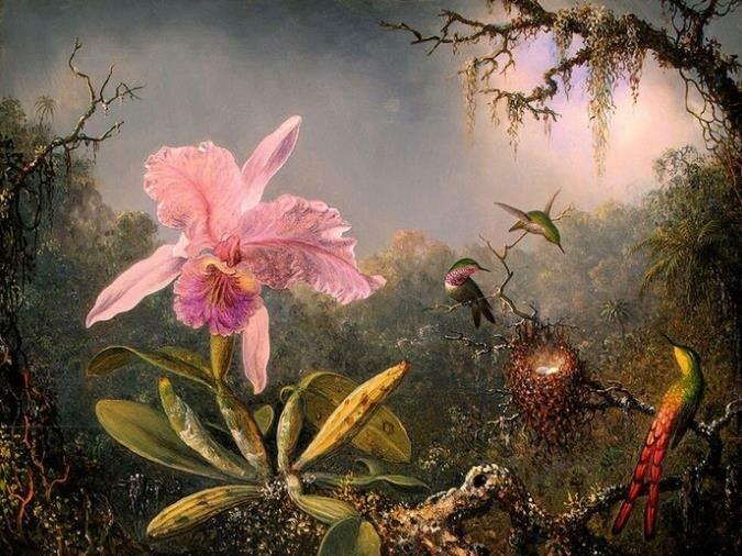 Орхидея следовала зову своего сердца