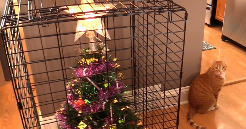 Клетка - идеальное решение  елка, животные, защита