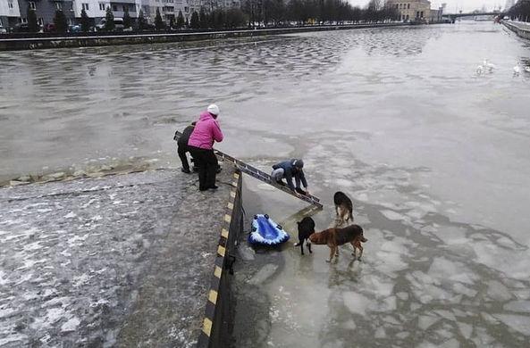 В Калининграде прохожие спасли собак на реке Преголя