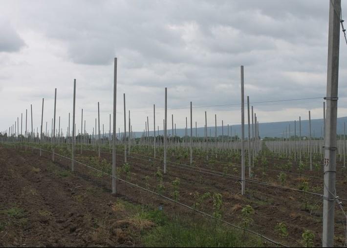 В Дагестане заложено втрое больше садов интенсивного типа