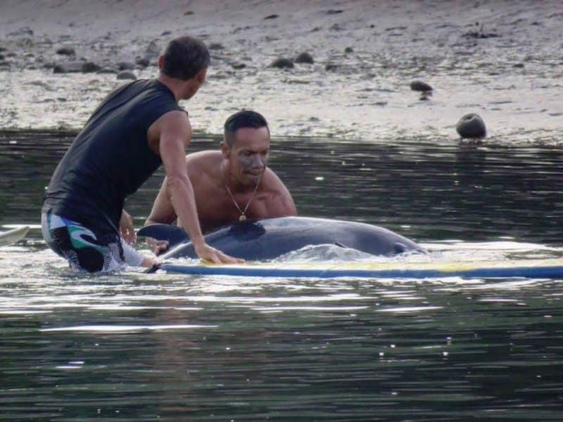 02-surfistas-delfin