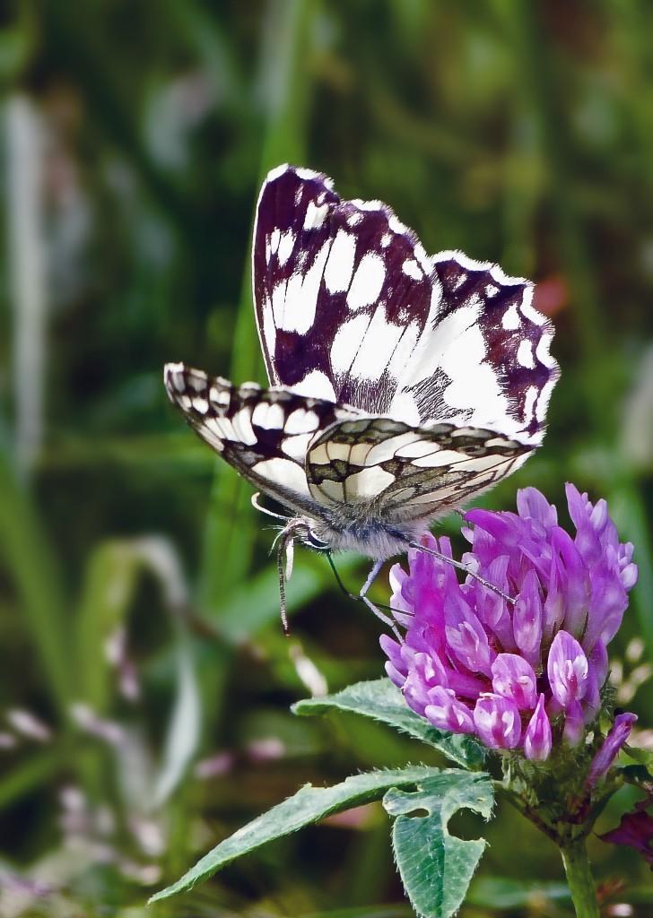 Цветоток и бабочка