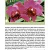Орхидеи.page112