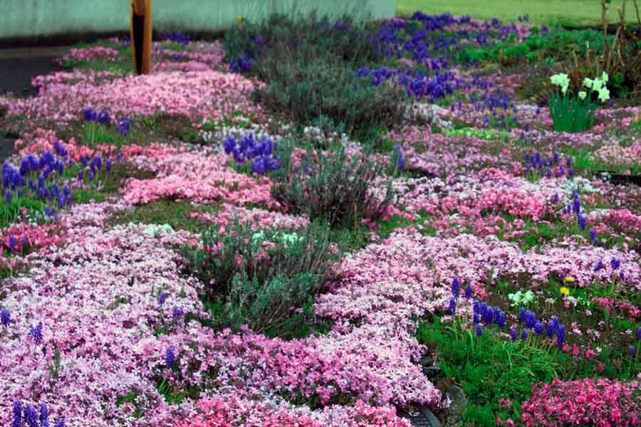 Названия почвопокровных растений