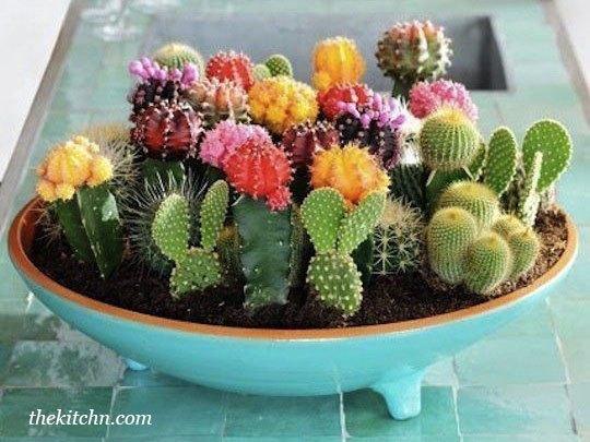 Композиции из кактусов и суккулентов в дизайне клумб — идеи и советы