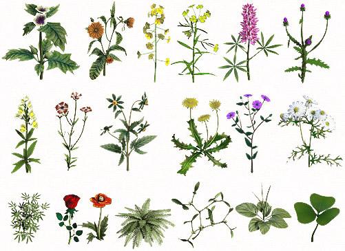 Летняя трава в народной медицине