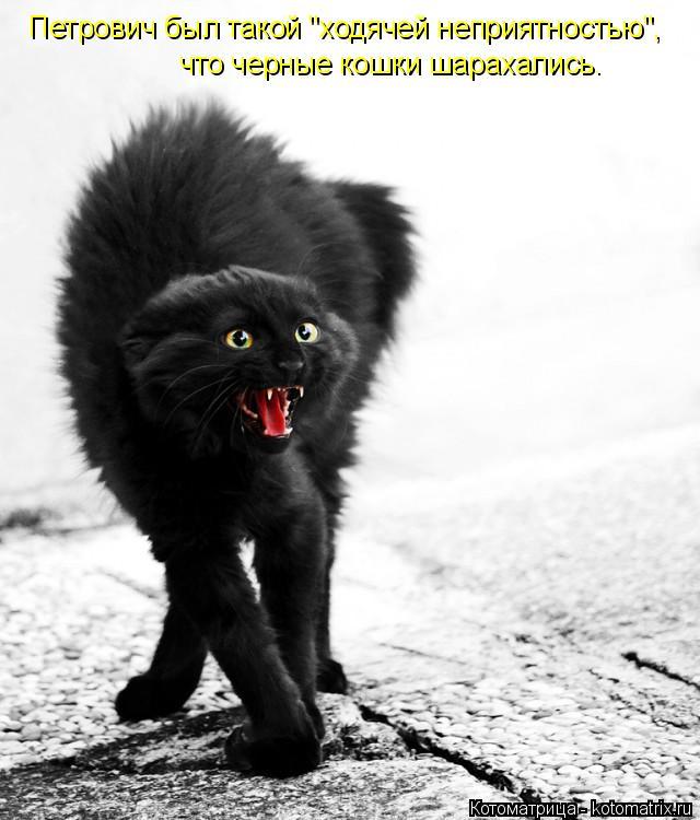 """Котоматрица: Петрович был такой """"ходячей неприятностью"""", что черные кошки шарахались."""