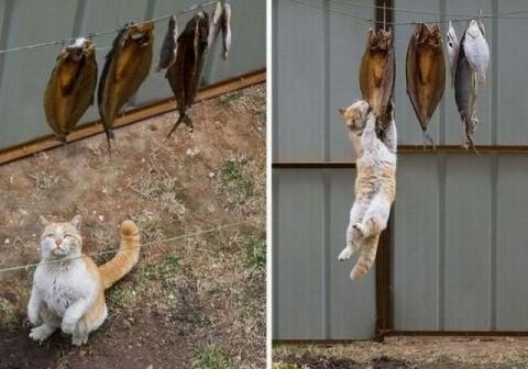 Одной семье повезло с котом.