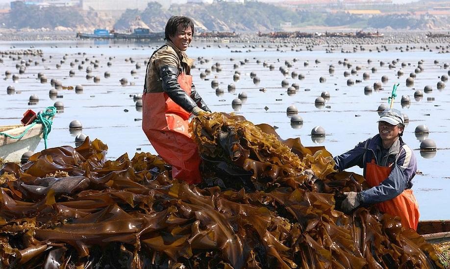 Рабочие в Южной Корее