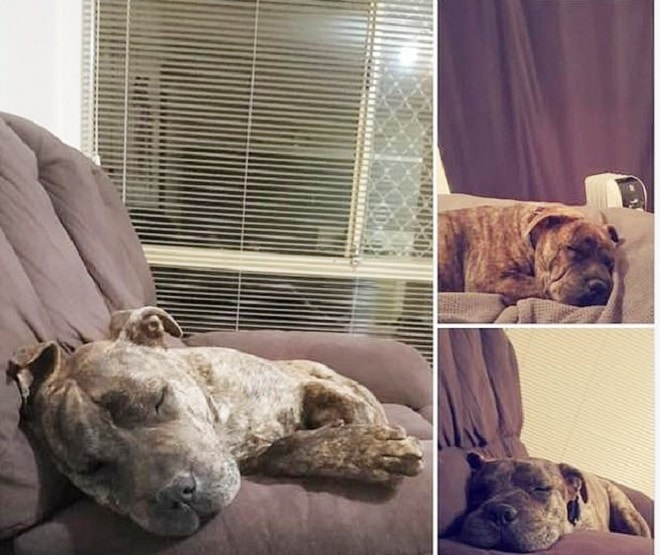 Пса украли у хозяина, а спустя два года его случайно нашли на улице