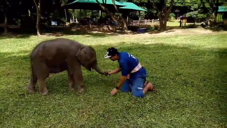 Будьте снисходительны к слонятам, они такие неуклюжие!