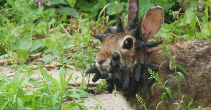 Картинки по запросу Он заметил в своем дворике одного кролика, вид к