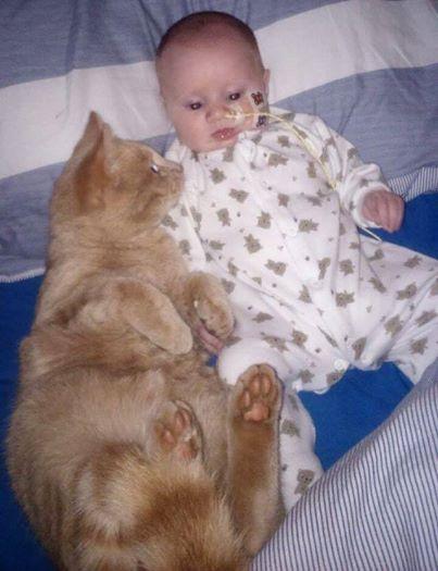 Кот стал ангелом-хранителем для новорожденного малыша